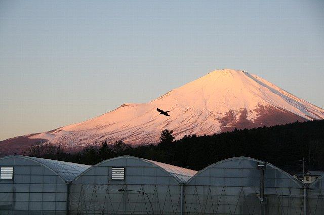 富士山b1