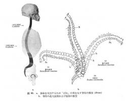 背骨可動域