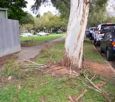 折れた木がたくさん落ちていた