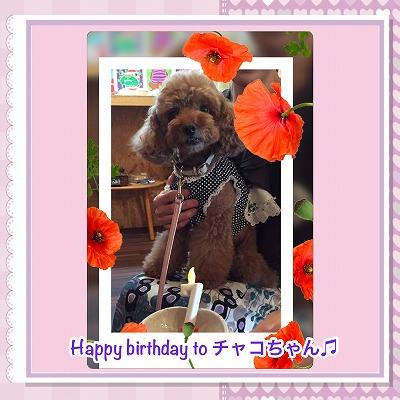 チャコちゃん/Birthday Girl♪♪