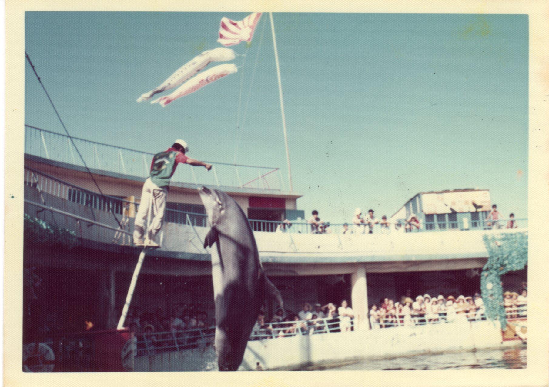 江ノ島水族館・イルカショー(1974年)436