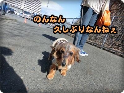 白音のんトライアル104