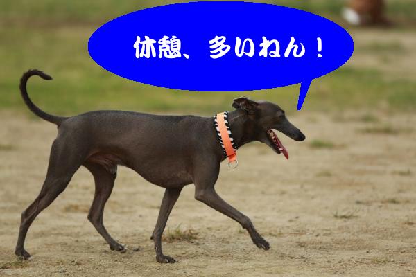 IMG_1149_convert_20150812185808.jpg