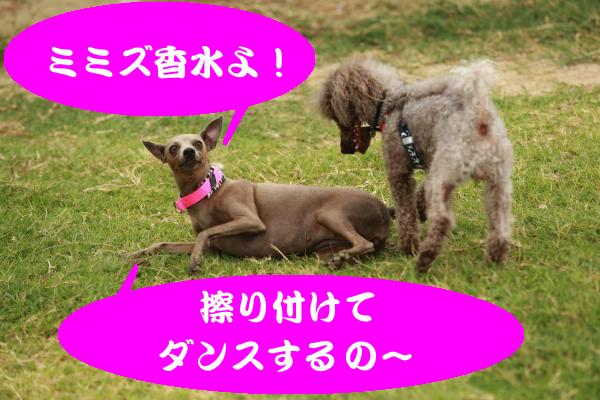 IMG_1231_convert_20150812192013.jpg