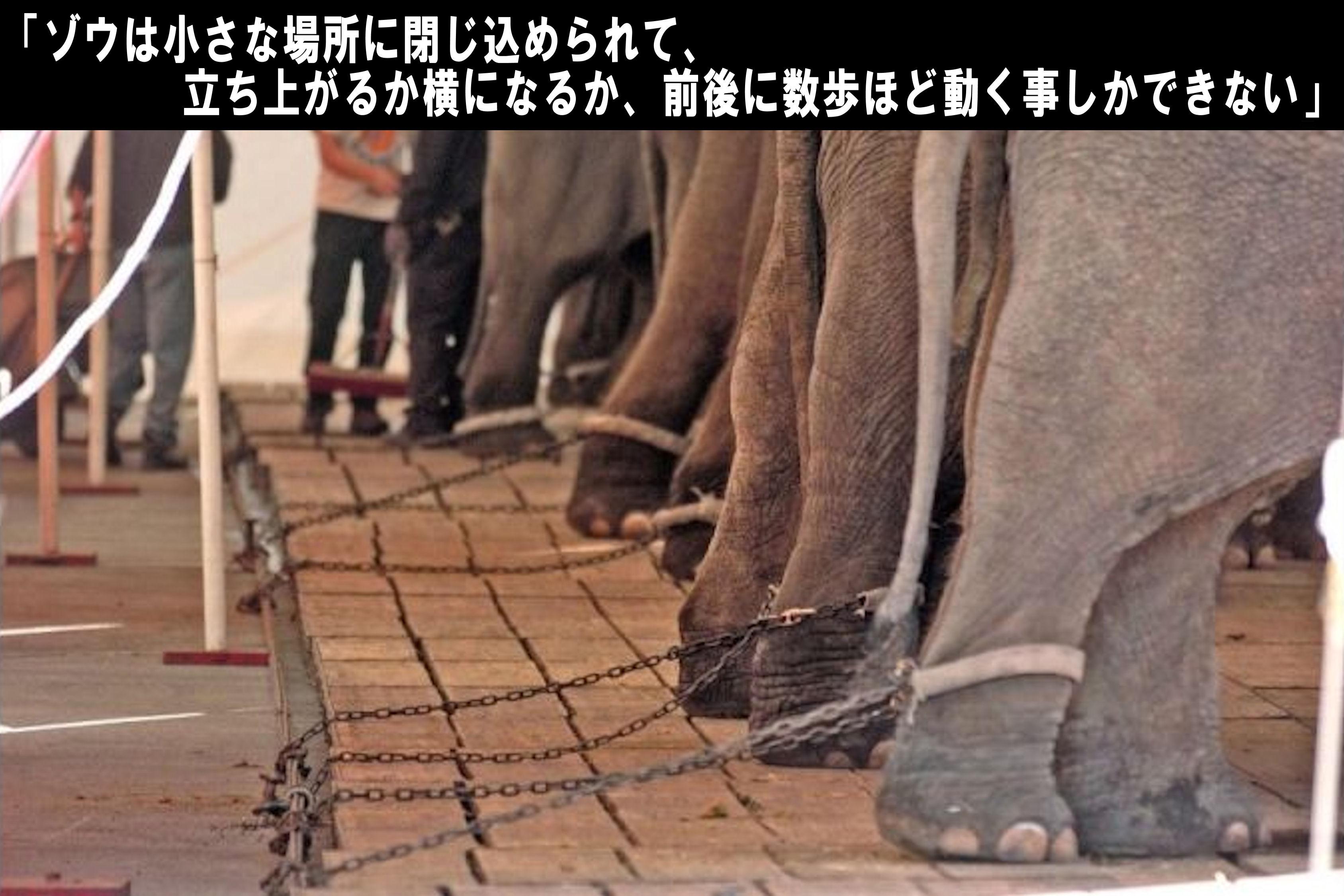 circusdemo3.jpg