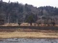 文化財指定の石積護岸と青葉山