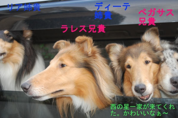 nisinohosi01_20150816182635ebd.jpg
