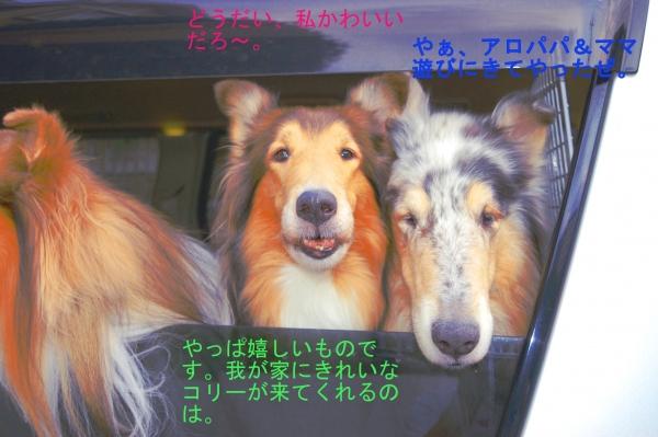 nisinohosi02_20150816182642bbe.jpg