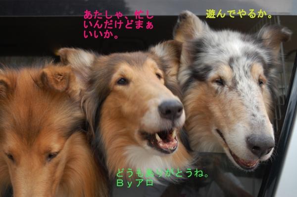 nisinohosi04_20150816182645a0a.jpg