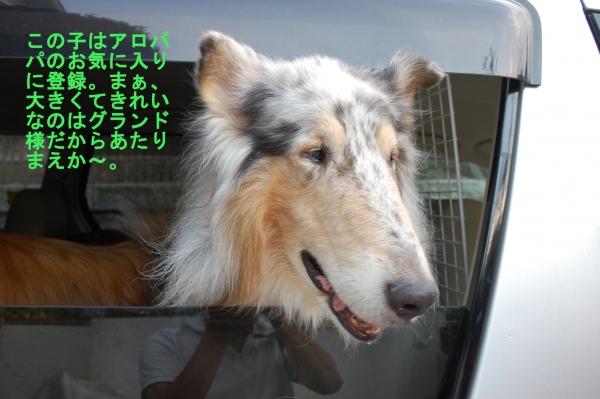 nisinohosi05_20150816182632198.jpg