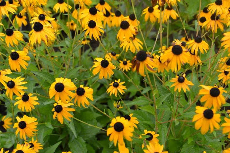 夏の花たち-1