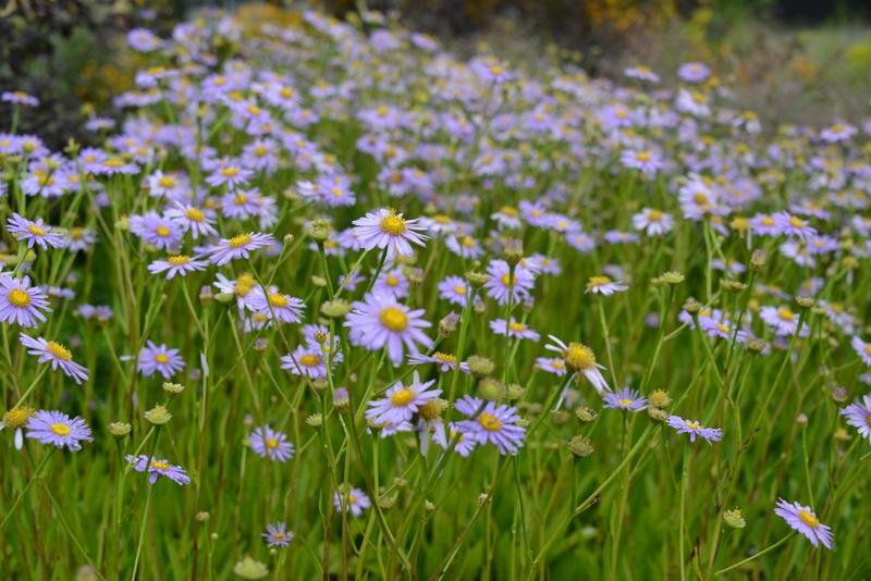 夏の花たち-2