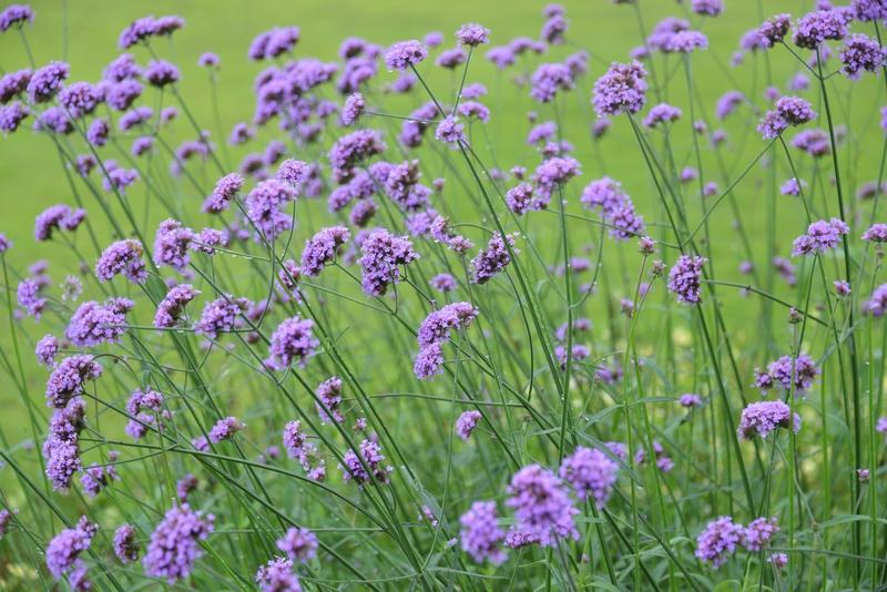 夏の花たち-3