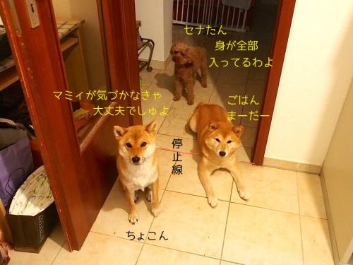 腹ペコ3姉妹1