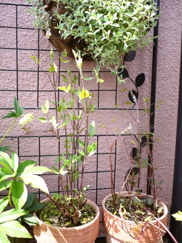 gardening399