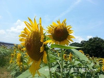 20150809_120029.jpg