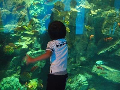 魚いーっぱい♪