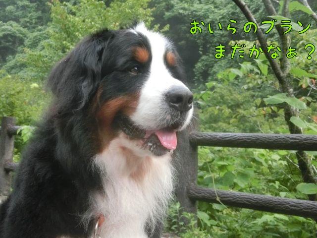 CIMG5057_20150812173135168.jpg