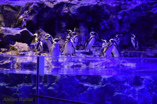 003-ペンギン