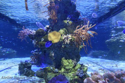 006-海水魚