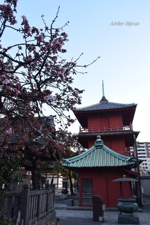 040-寒桜