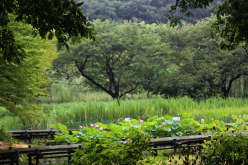 IMG_0555丸山