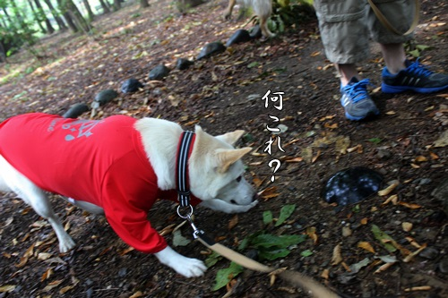 IMG_0546丸山