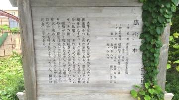 黒松 (1)_600