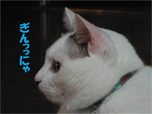 s-150816-9.jpg