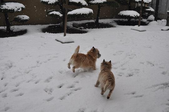 20150130雪遊び6