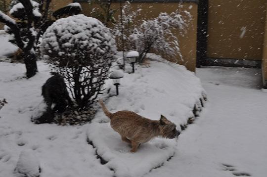 20150130雪遊び4