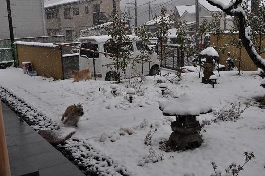 20150130雪遊び3