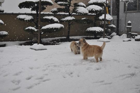 20150130雪遊び8