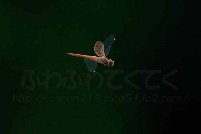 5DSR1747LR_1507.jpg