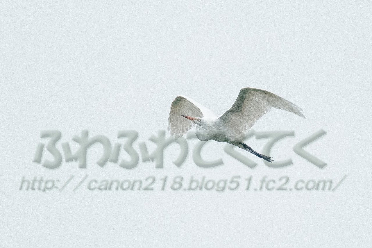 b5DSR1829LRp_1507.jpg