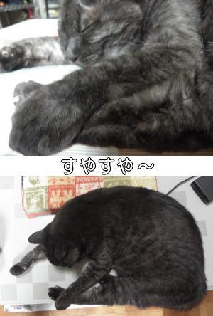 眠い眠い・・