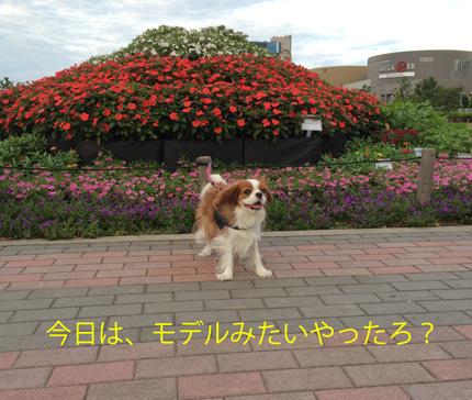 20150811-115.jpg