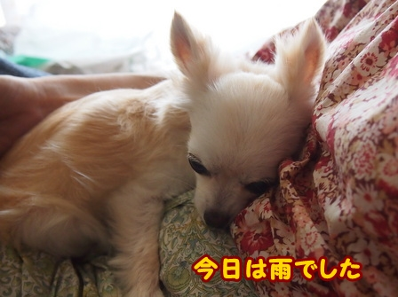 blog6634a.jpg