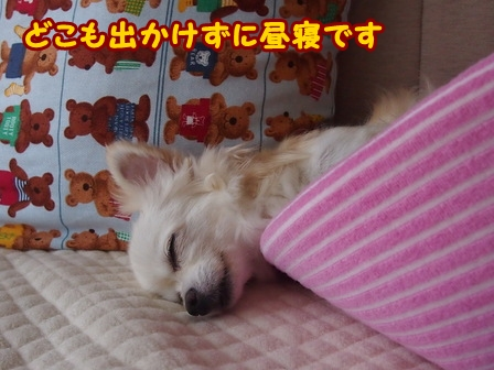 blog6635a.jpg