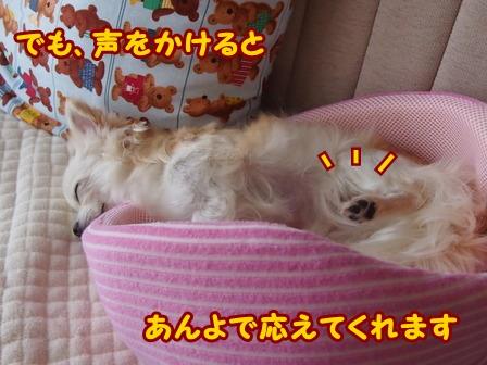 blog6637a.jpg