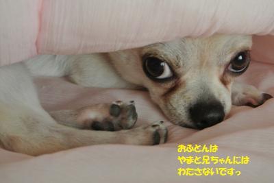 DSC_3346_convert_20150812111525.jpg