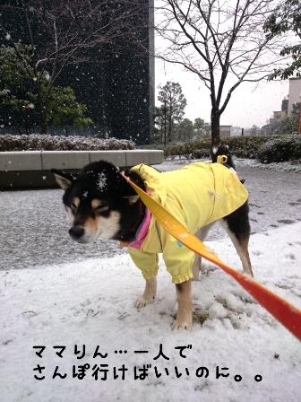 1月30日初雪りん。。
