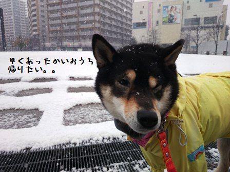 1月30日初雪りん。