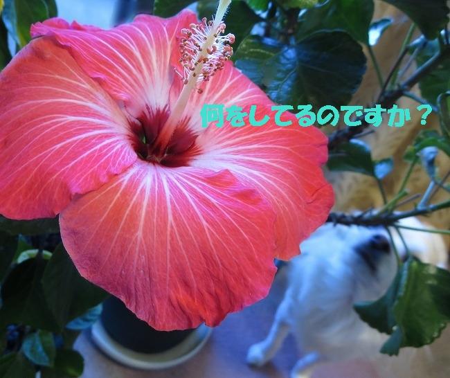 IMG_1386.jpg