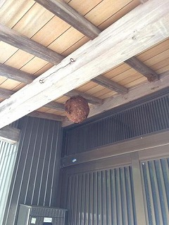 スズメ蜂の巣