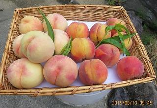 白桃と黄金桃