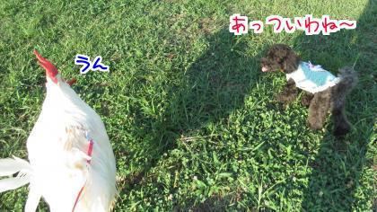 二太2015/08/16-2