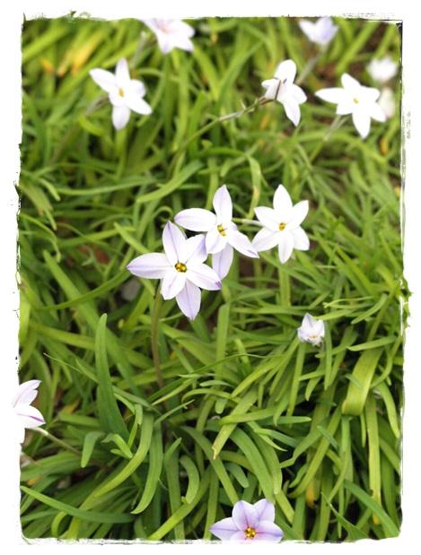 140402flower1.jpg