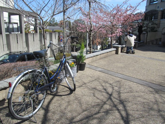 20150302kawazu02.jpg
