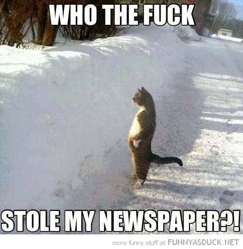 0130funny-who-took-my-paper-cat-standing-up-snow-pics